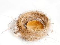 vogels nest met gouden muntstuk Stock Afbeeldingen