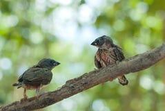 Vogels op boom Royalty-vrije Stock Afbeelding
