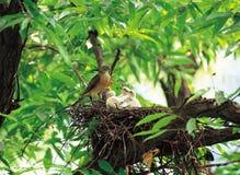 Vogels op Boom Royalty-vrije Stock Afbeeldingen