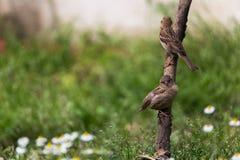 Vogels op boomlidmaat dat worden neergestreken Stock Foto