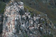 Vogels op de bergaard stock afbeelding