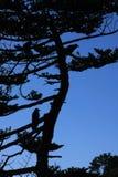Vogels op de boom Royalty-vrije Stock Afbeeldingen