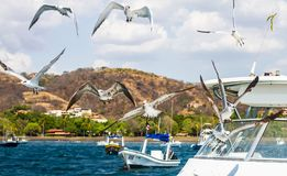 Vogels op de boot royalty-vrije stock foto's
