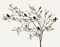 Vogels op de de lenteboom Royalty-vrije Stock Afbeeldingen