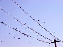 Vogels op de draad Stock Fotografie