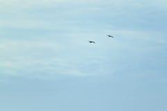 Vogels op de hemel Stock Fotografie