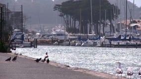 Vogels op de kust stock video