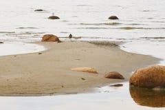 Vogels op de kust Stock Afbeelding