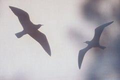 Vogels op de muur Royalty-vrije Stock Afbeelding