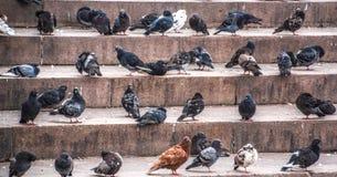 Vogels op de stappen van de stad stock afbeelding