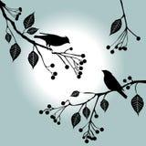 Vogels op de tak. De dagen van de zomer. Royalty-vrije Stock Foto