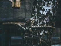 Vogels op de tak van de boomzitting Stock Afbeelding