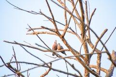 Vogels op de takken stock afbeeldingen