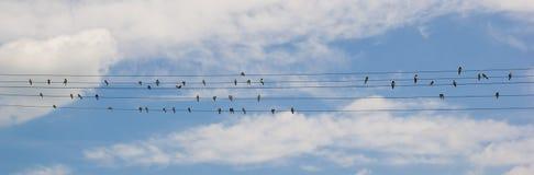 Vogels op draad Stock Afbeelding