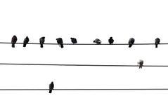 Vogels op draad Royalty-vrije Stock Afbeelding