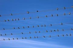 Vogels op draad Stock Foto