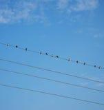 Vogels op draad Blauwe hemel Royalty-vrije Stock Foto's