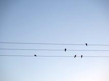 Vogels op Draden Stock Afbeelding