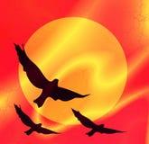 Vogels op een achtergrond van de zon Stock Afbeeldingen