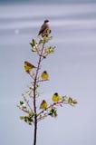 Vogels op een boom Stock Afbeeldingen