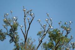 Vogels op een boom Royalty-vrije Stock Afbeeldingen