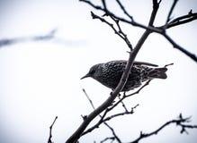 Vogels op een boom Royalty-vrije Stock Afbeelding