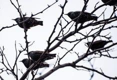 Vogels op een boom Royalty-vrije Stock Foto's
