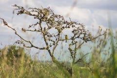 Vogels op een boom van een afstand worden bevlekt die stock afbeeldingen