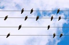 Vogels op een Draad Royalty-vrije Stock Foto