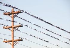 Vogels op een draad Royalty-vrije Stock Afbeeldingen