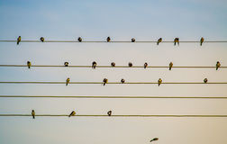 Vogels op een Draad Stock Fotografie