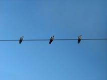 Vogels op een draad in de vorm van wasknijpers Stock Foto