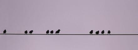 Vogels op een draad, numerieke opeenvolging Stock Fotografie