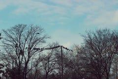 Vogels op een draad - troep van vogels die op een draad, tussen tre zitten Royalty-vrije Stock Foto