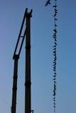 Vogels op een kabel Royalty-vrije Stock Afbeelding