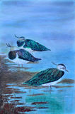 Vogels op een Lakeshore Royalty-vrije Stock Afbeeldingen