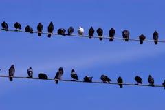 Vogels op een lijn Stock Foto's