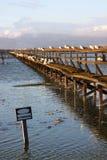 Vogels op een pijler Stock Foto