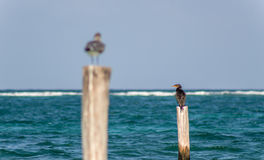 Vogels op een post Stock Foto