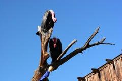 Vogels op een tak Stock Afbeelding