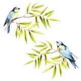 Vogels op een tak De hand trekt waterverfillustratie Stock Afbeeldingen