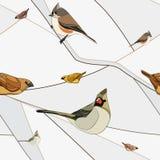 Vogels op een tak. Naadloos patroon. Royalty-vrije Stock Foto's