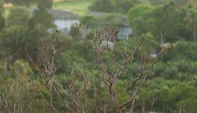 Vogels op een tak van een dode boom Stock Afbeeldingen