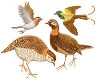 Vogels op een witte achtergrond Stock Fotografie