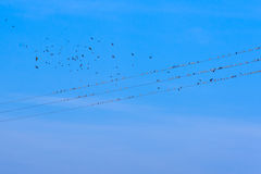 Vogels op elektriciteitsdraden Royalty-vrije Stock Foto