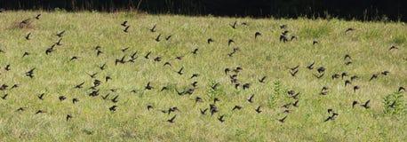 Vogels op gebied 5 Royalty-vrije Stock Afbeeldingen