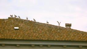 Vogels op het dak stock videobeelden