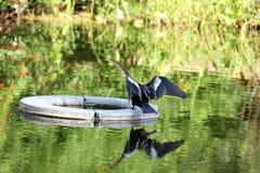Vogels op het meer royalty-vrije stock afbeeldingen