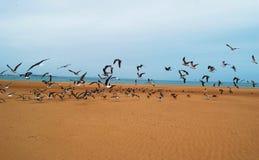 Vogels op het strand royalty-vrije stock fotografie