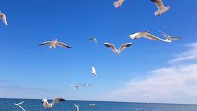 Vogels op het strand stock footage